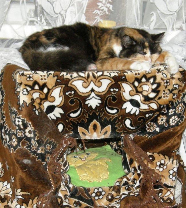 Как сделать домик для кошек из картонной коробки